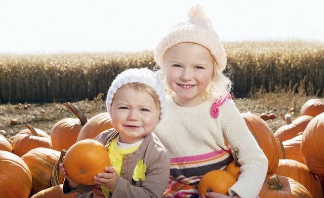 Thanksgiving pumpkin farm