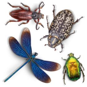 Science Time Spanish – Insectos online course taught by Renai Ruiz