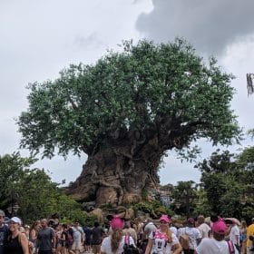 tree of life studied in Disney STEAM : Animal Kingdom an online course