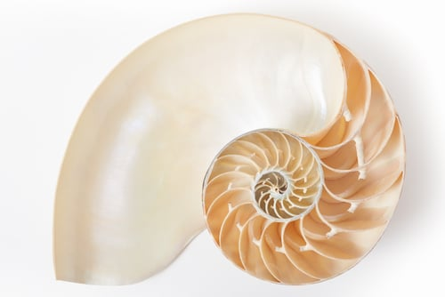 Fibonacci_spiral_shell_luma_learn
