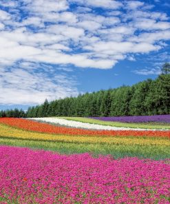 bright field of flower attended by homeschool student