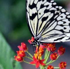 butterfly on red plant studied in biology online course